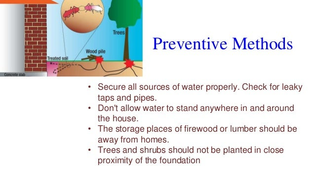 Preventive Methods • Secure all sources of water properly. Check for leaky taps and pipes. • Don't allow water to stand an...