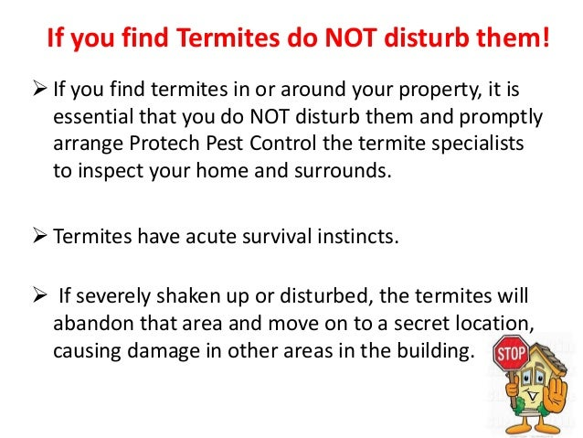 Termite Pest Control Service In Melbourne By Protech Pest