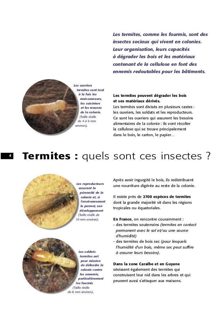 Les termites, comme les fourmis, sont des                                       insectes sociaux qui vivent en colonies.  ...