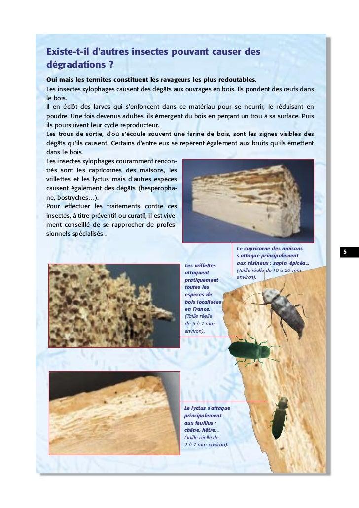 Existe-t-il dautres insectes pouvant causer desdégradations ?Oui mais les termites constituent les ravageurs les plus redo...