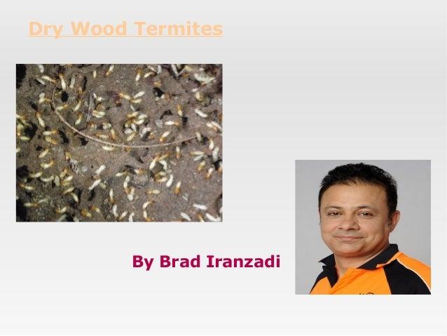 Dry Wood Termites  By Brad Iranzadi