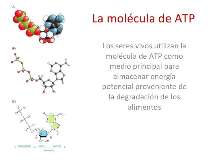 Termodinamica for Que significa molecula