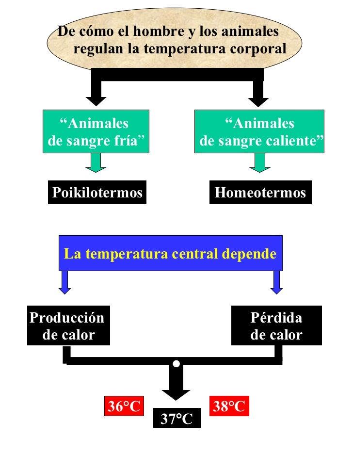 """De cómo el hombre y los animales  regulan la temperatura corporal """" Animales de sangre caliente"""" Poikilotermos Homeotermos..."""