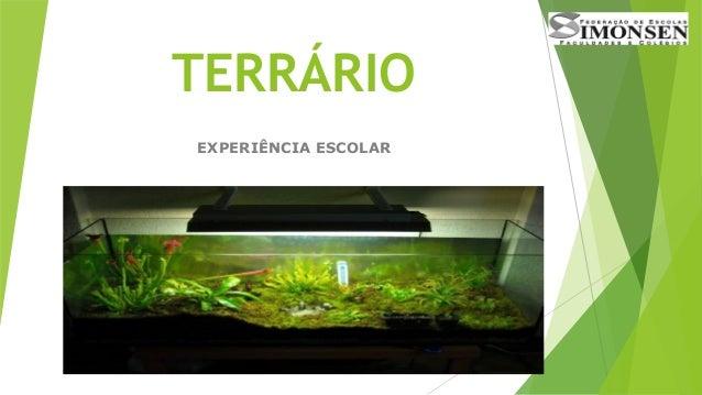 TERRÁRIO EXPERIÊNCIA ESCOLAR