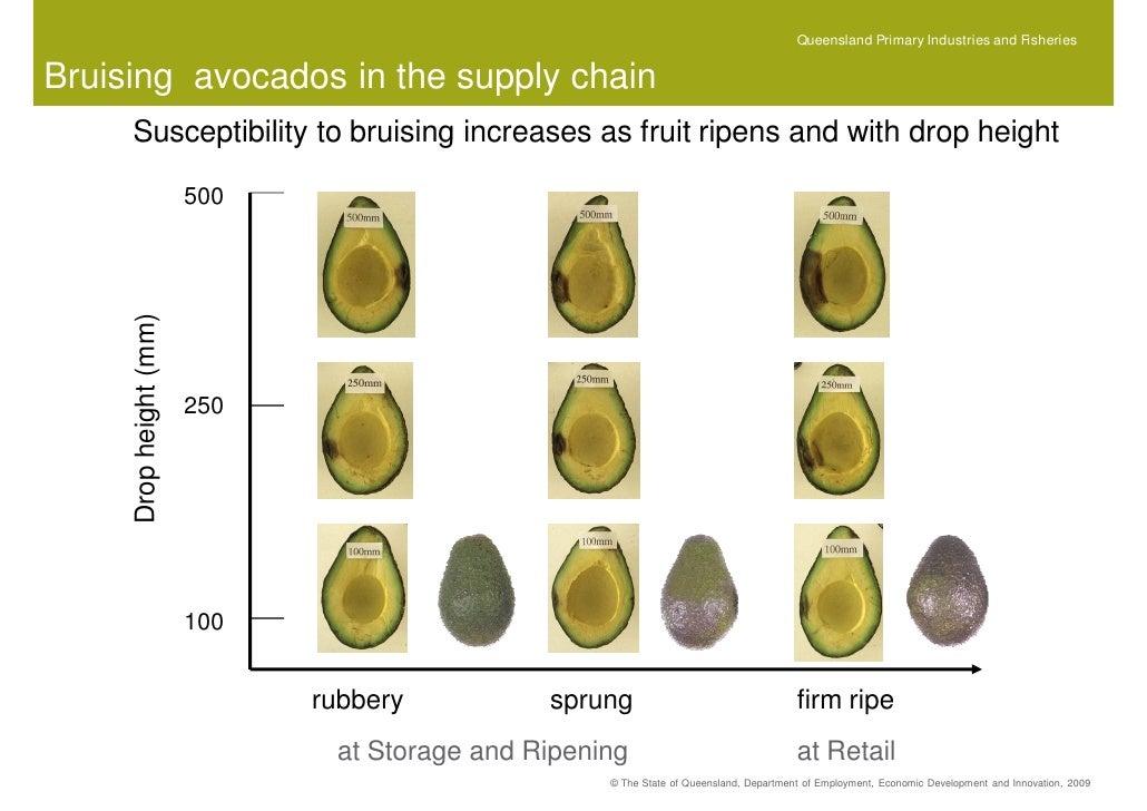 an avocado is a fruit analysis University of california cooperative extension ventura - avocado leaf analysis - 2000.