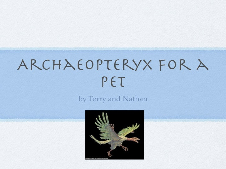 Archaeopteryx for a        pet      by Terry and Nathan