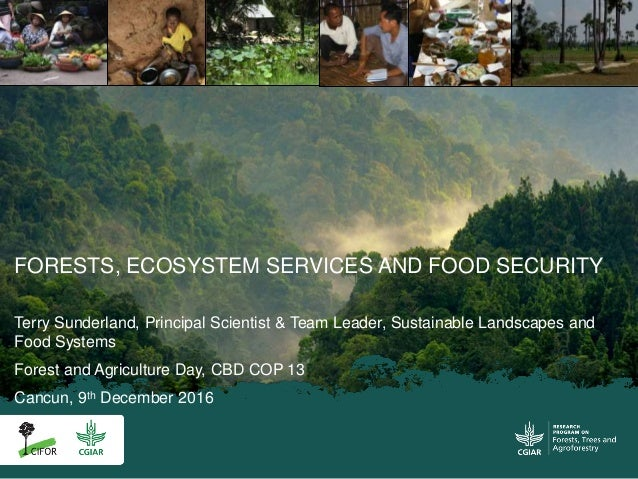 FORESTS, ECOSYSTEM SERVICES AND FOOD SECURITY Terry Sunderland, Principal Scientist & Team Leader, Sustainable Landscapes ...