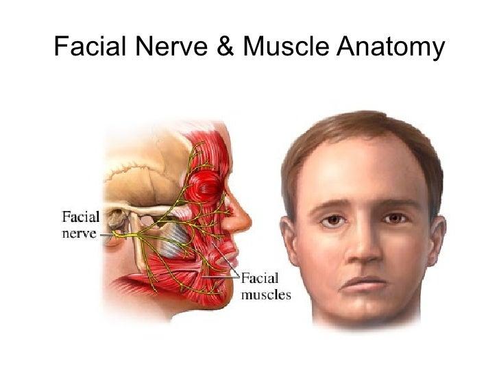 Electrical facial stimulation