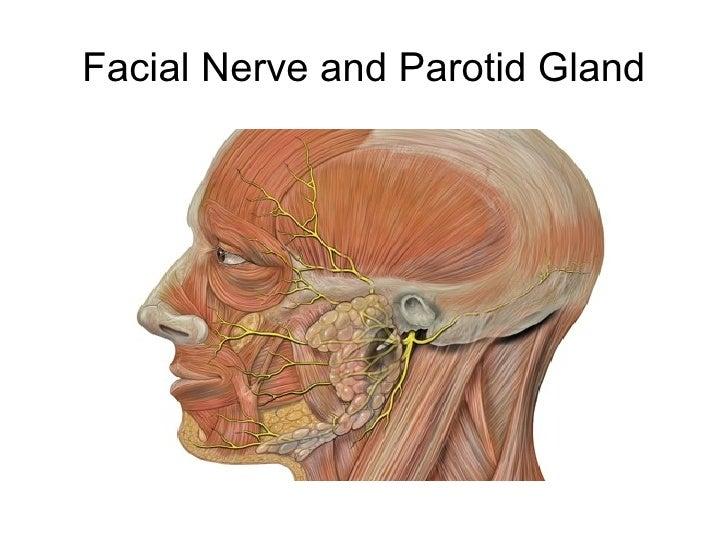 Inflamed facial nerve headache eyebrow — photo 11