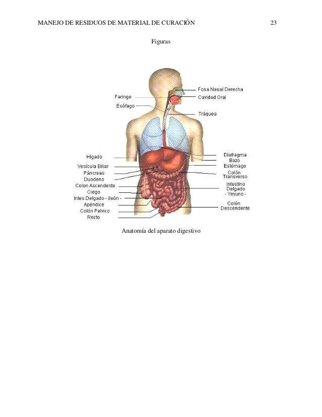 Bonito Basura Anatomía Disposición Regalo - Imágenes de Anatomía ...