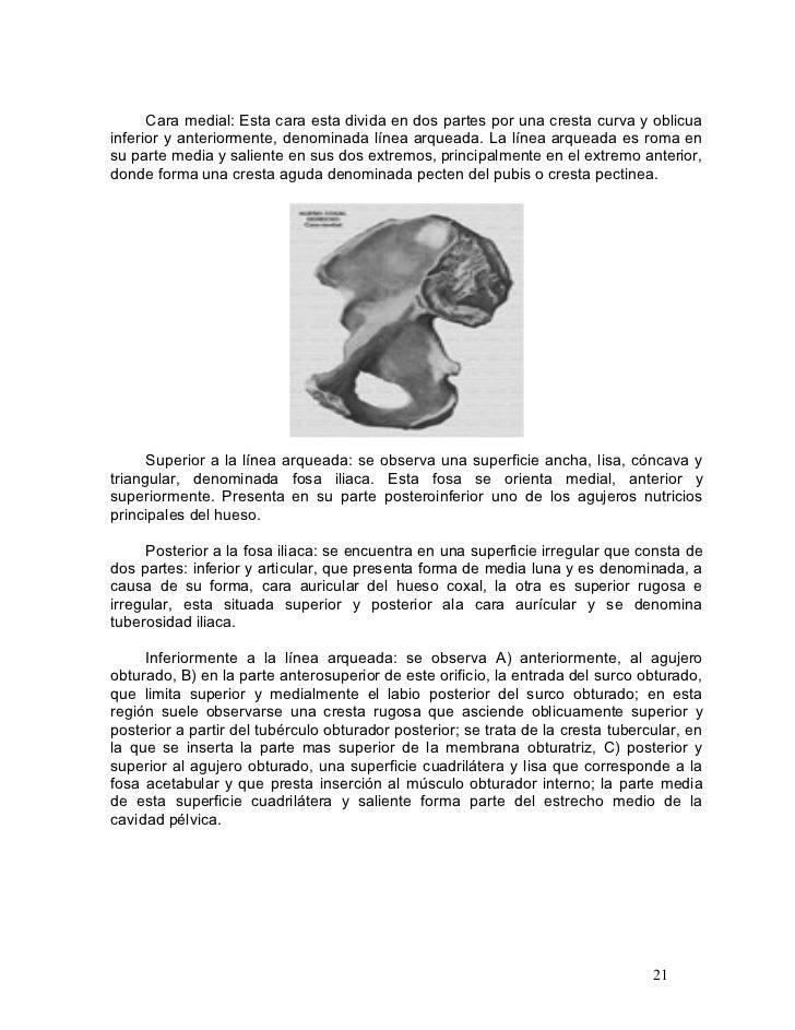 tesis de placa simple para el diagnostico de luxacion congenita de ca…