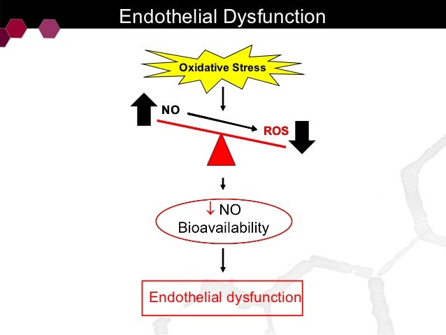 Effects of the red wine polyphenols on the endothelial..