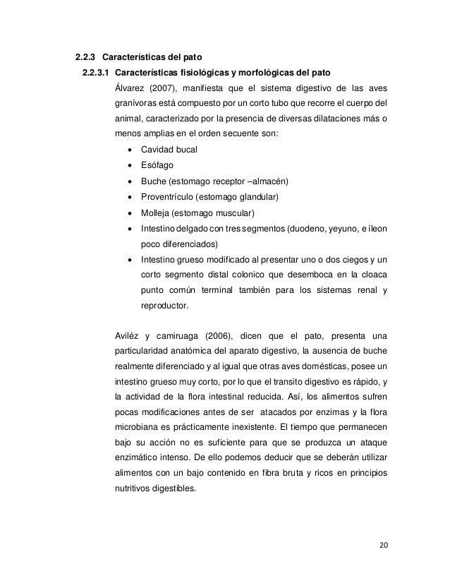 Lujo Anatomía De Un Pato Fotos - Imágenes de Anatomía Humana ...