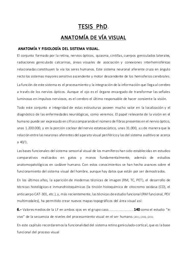 ANATOMÍA DE LA VÍA VISUAL