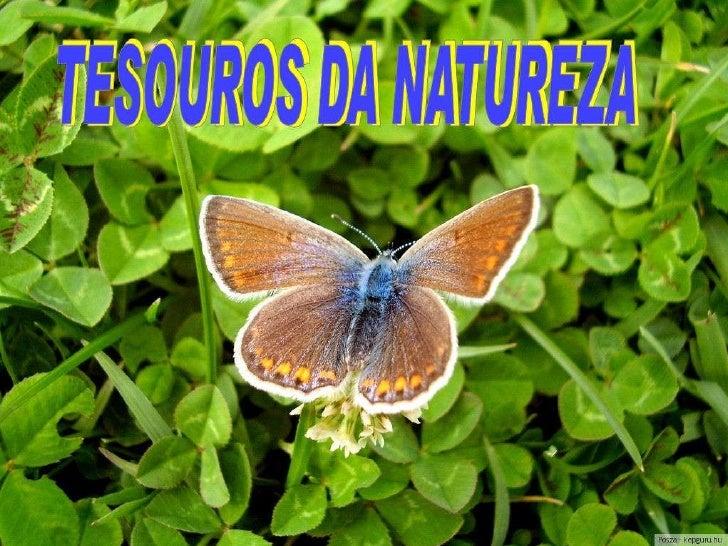 Tesouros da natureza