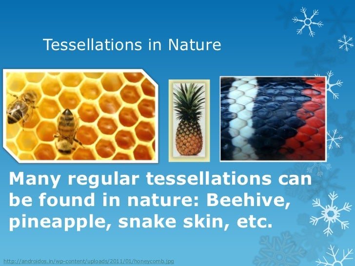 Regular Polygons In Nature Tessellations