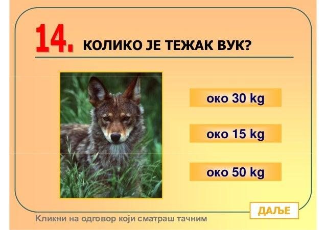 КОЛИКО ЈЕ ТЕЖАК ВУК?                                    око 30 kg                                    око 15 kg            ...