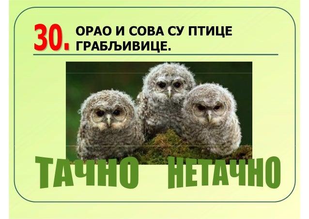 ОРАО И СОВА СУ ПТИЦЕГРАБЉИВИЦЕ.