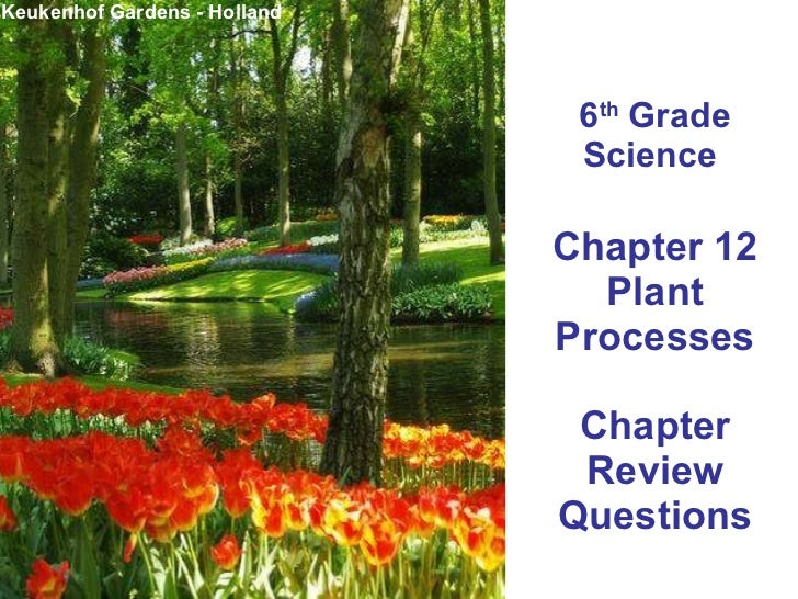 6 th  Grade Science  Chapter 12 Plant Processes Chapter Review Questions Keukenhof Gardens - Holland