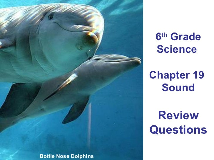 6 th  Grade Science  Chapter 19  Sound Review Questions Bottle Nose Dolphins