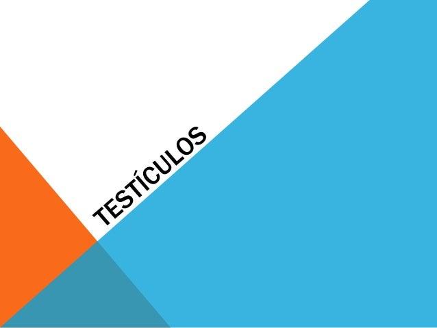 TESTÍCULOS. El testículo posee dos funciones básicas: endocrina (producción de hormonas) y exocrina (producción de esperma...
