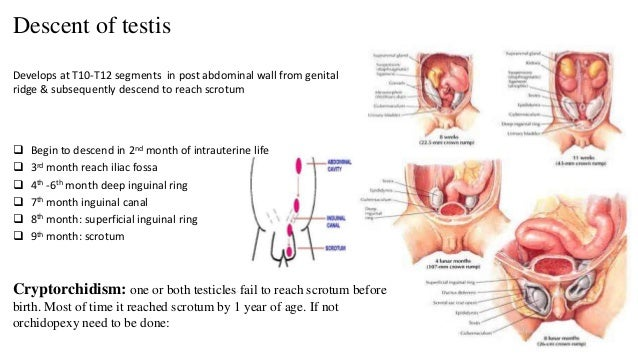 testicles before and after steroids pictures