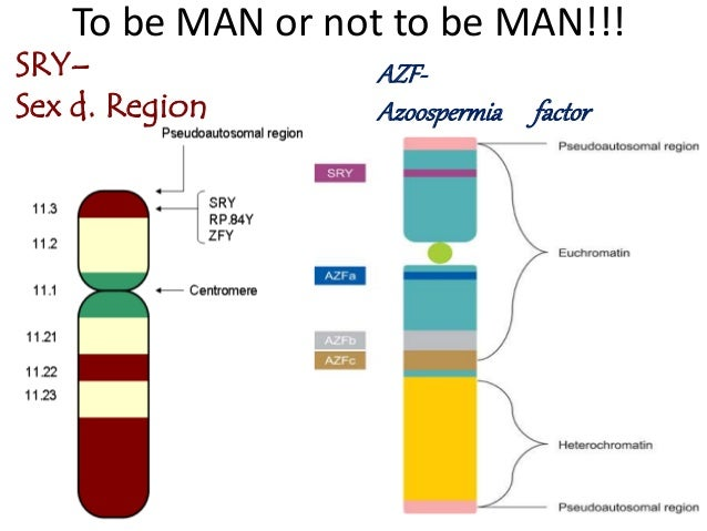 Y Chromosome Microdeletion DNA Analysis