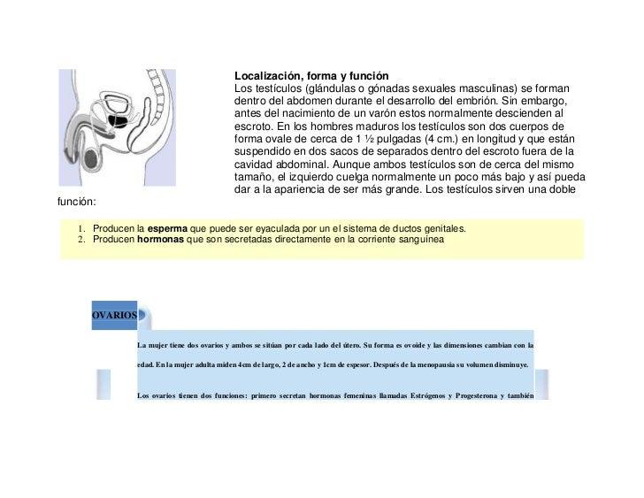 left0<br />Localización, forma y funciónLos testículos (glándulas o gónadas sexuales masculinas) se forman dentro del abdo...