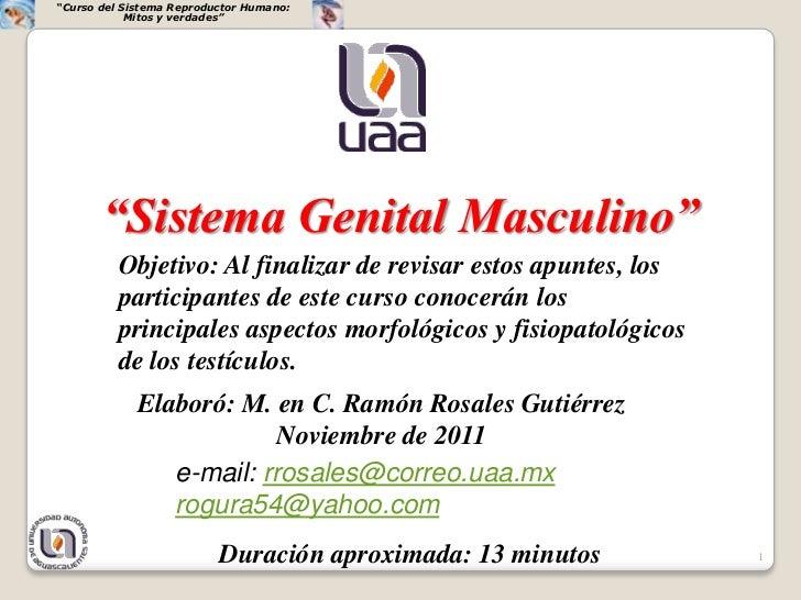 """""""Curso del Sistema Reproductor Humano:            Mitos y verdades""""       """"Sistema Genital Masculino""""          Objetivo: A..."""