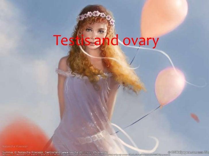 Testis and ovary