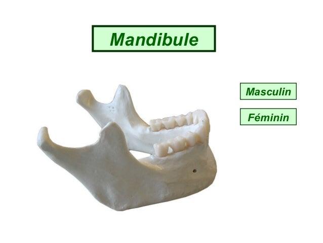 Test quiz masculin ou feminin  Slide 3