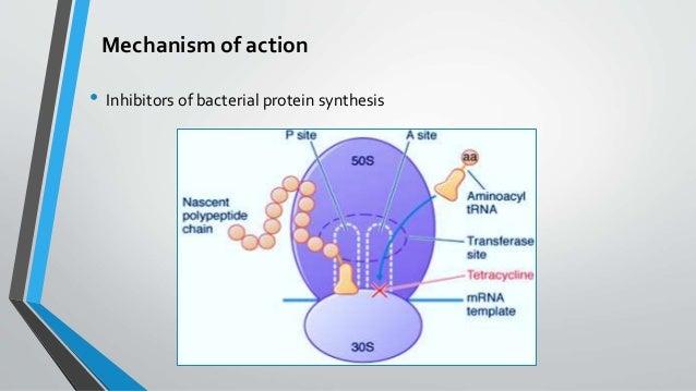 tetracycline anti anabolic