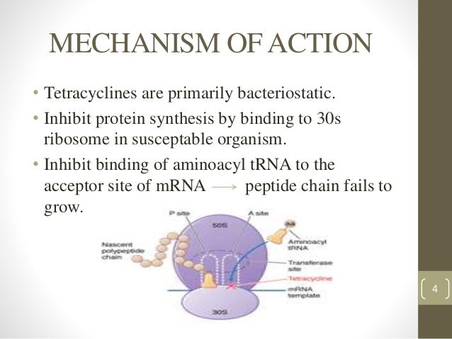 trna in protein synthesis