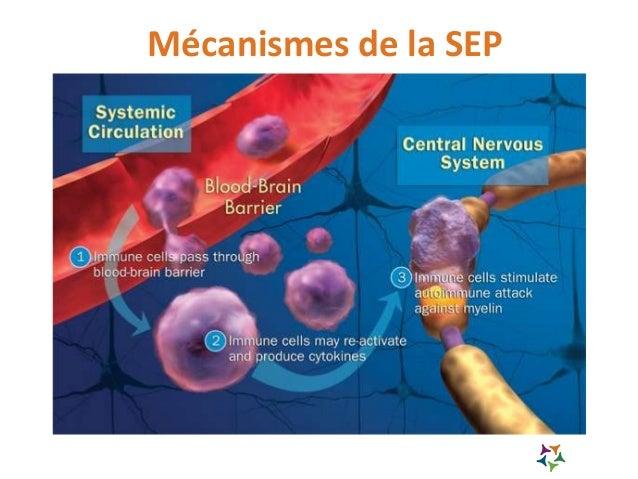 Mécanismes de la SEP