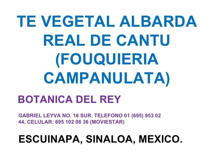 TE VEGETAL ALBARDA REAL DE CANTU (FOUQUIERIA CAMPANULATA) BOTANICA DEL REY ESCUINAPA, SINALOA, MEXICO. GABRIEL LEYVA NO. 1...