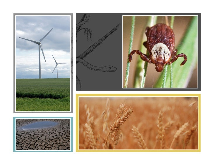 Lu et al. 2009                                                     Diuk-Wasser 2012                  Δ NPP               Δ...