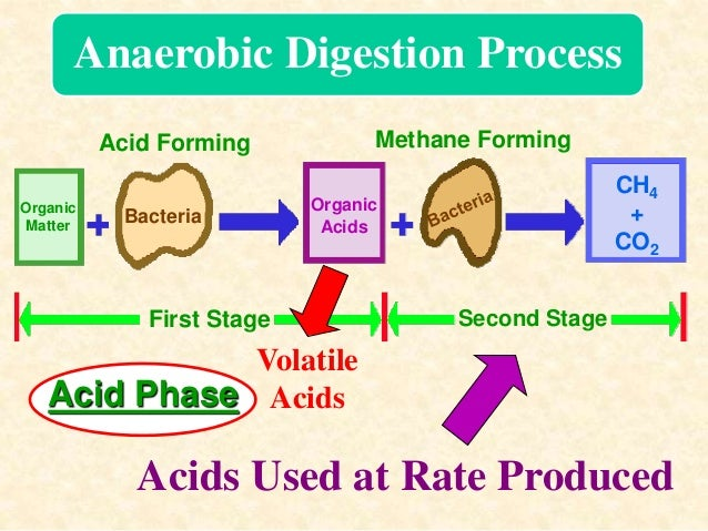 the food digestion process Energy transformation during digestion  digestion chemical digestion physical process chemical process begins in the mouth with the teeth & tongue begins in the.