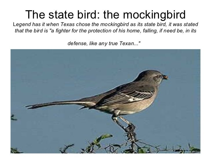 14 the state bird