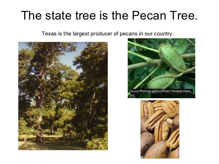 9 the state tree