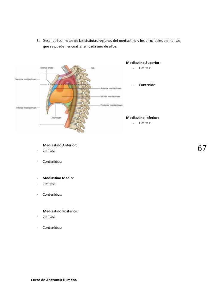 Trabajos practicos Anatomia