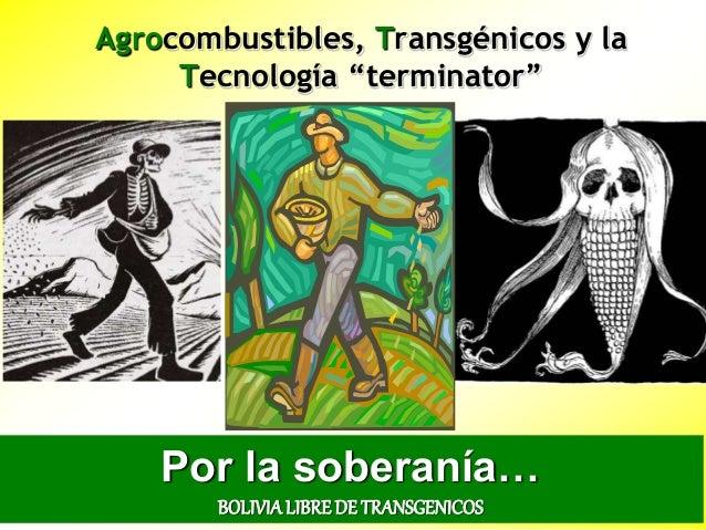 """Agrocombustibles, Transgénicos y la Tecnología """"terminator"""" Por la soberanía… BOLIVIALIBREDE TRANSGENICOS"""