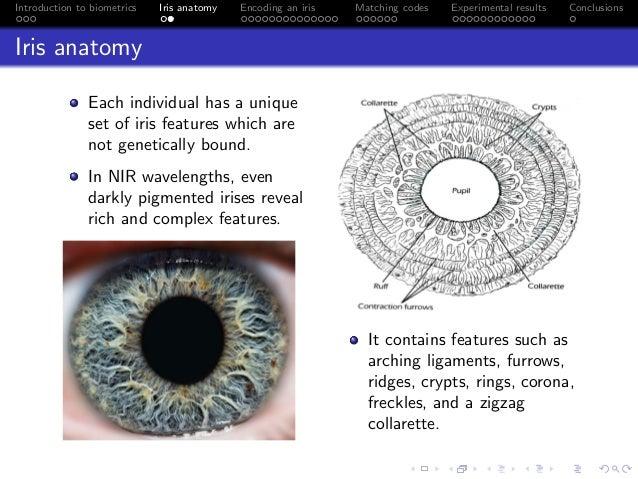 Human Iris Biometry