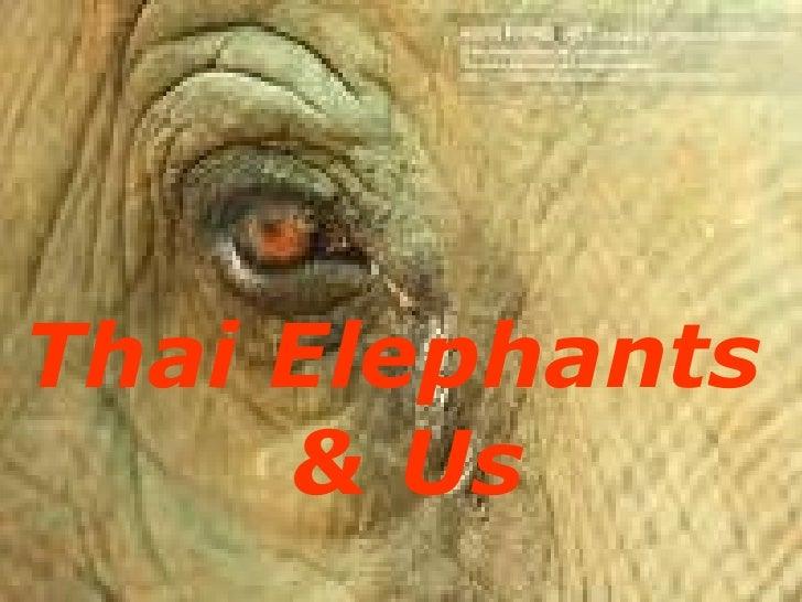 Thai Elephants  & Us