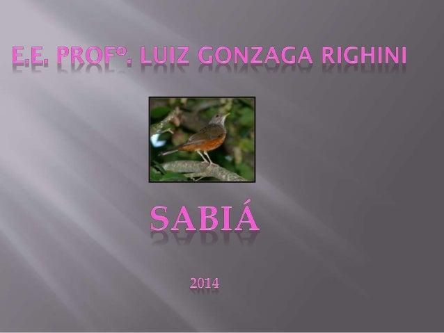 Estudar o sabiá- laranjeira, suas características, Alimentação e reprodução .