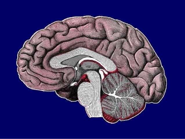 Thalamus, anatomy of thalamus, Thalamus PPT