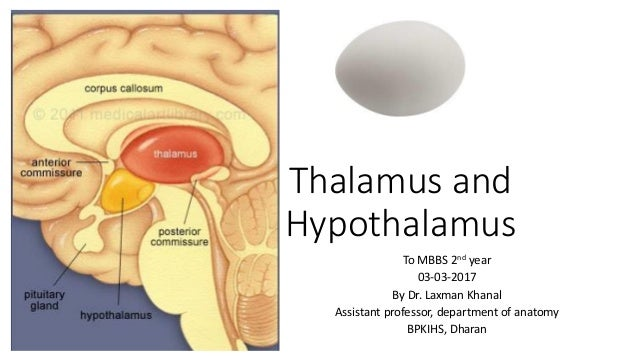 Antomy of Thalamus and hypothalamus