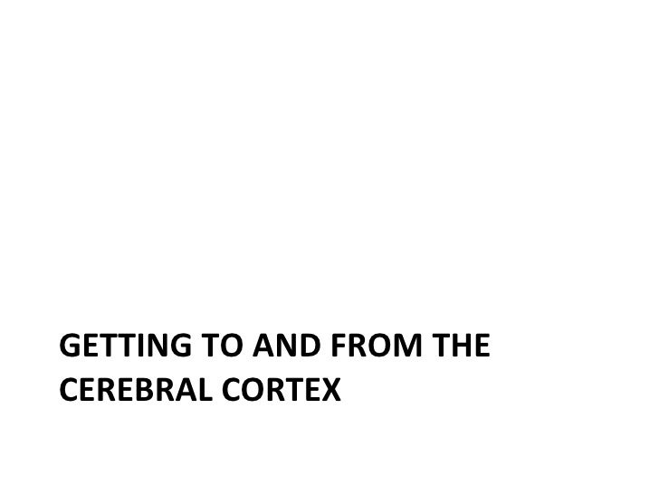GETTING TO AND FROM THECEREBRAL CORTEX