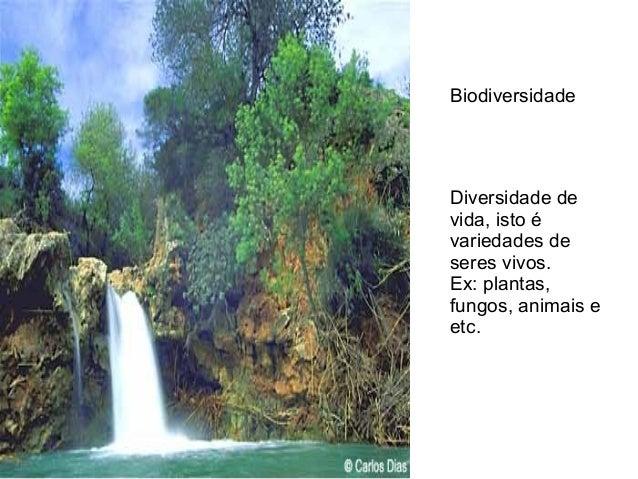 Diversidade de vida, isto é variedades de seres vivos. Ex: plantas, fungos, animais e etc. Biodiversidade