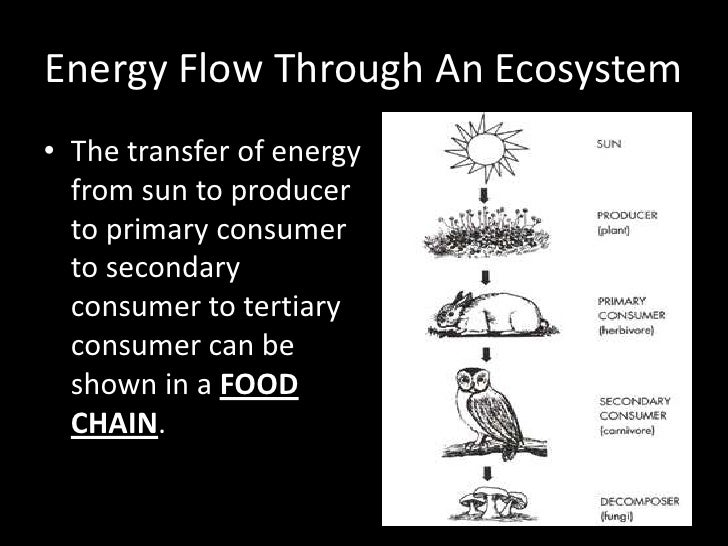 Nutrients And Energy Flow In An Ecosystem Pictures to Pin on – Energy Flow in Ecosystems Worksheet