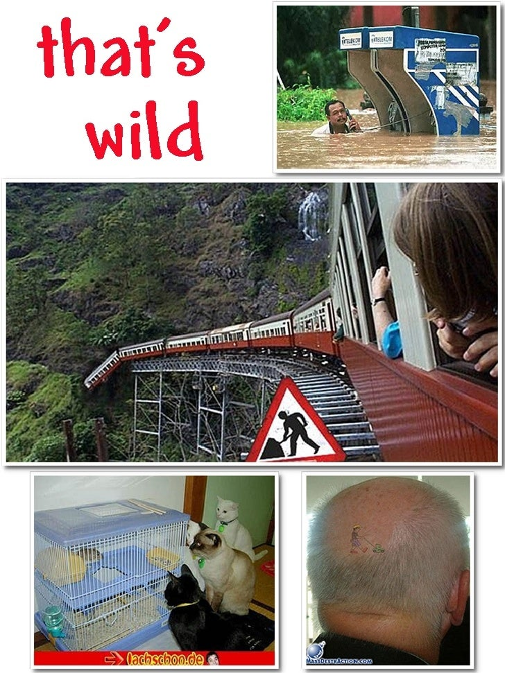 Thats Wild (24 Wild Ones)